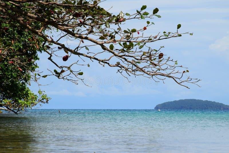 Zeegezicht met berg en boom bij oceaan Koh Chang-eiland, Thailand stock afbeeldingen