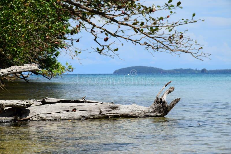 Zeegezicht met berg en boom bij oceaan Koh Chang-eiland, Thailand royalty-vrije stock foto's