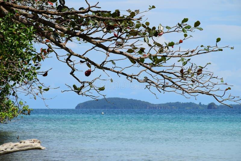 Zeegezicht met berg en boom bij oceaan Koh Chang-eiland, Thailand royalty-vrije stock foto