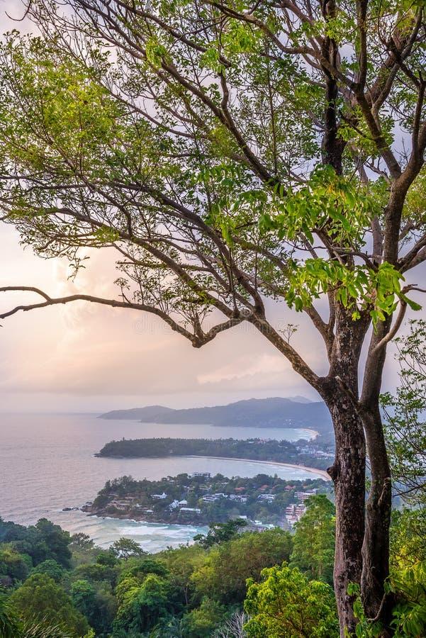 Zeegezicht met boom en zonsondergang in schemering stock afbeelding
