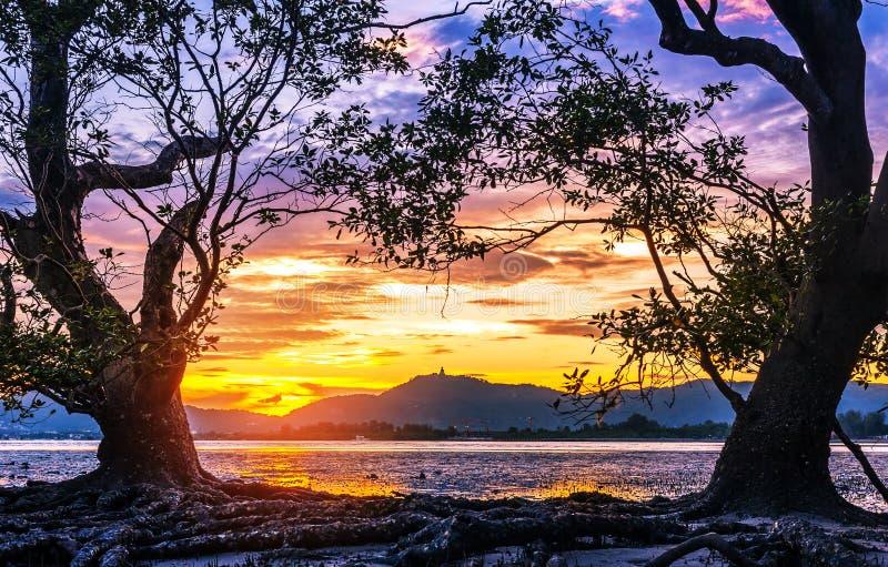 Zeegezicht met oude boom en kleurrijk van zonsondergang in schemering royalty-vrije stock afbeeldingen