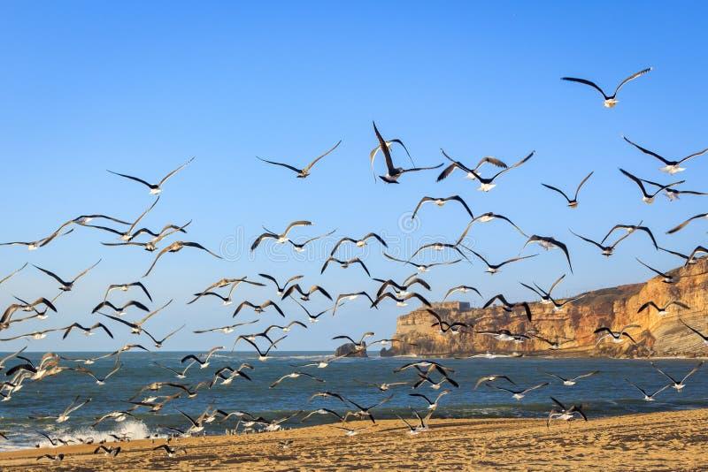 Zeegezicht met zeemeeuwen die bij Nazare-strand vliegen royalty-vrije stock foto's