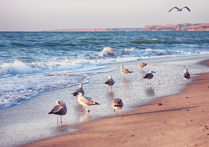 Zeegezicht met zeemeeuwen die bij strand vliegen royalty-vrije stock fotografie