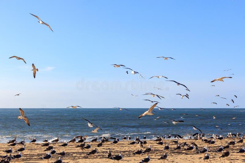 Zeegezicht met zeemeeuwen het vliegen royalty-vrije stock afbeeldingen