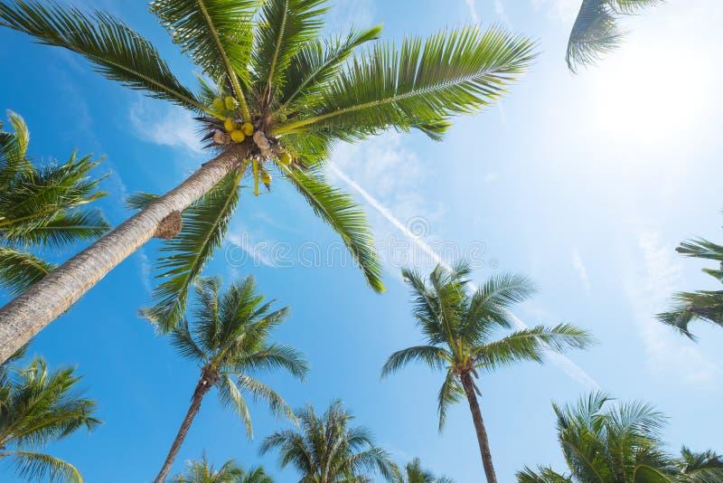 Zeegezicht van mooi tropisch strand met palm bij zonsopgang stock foto