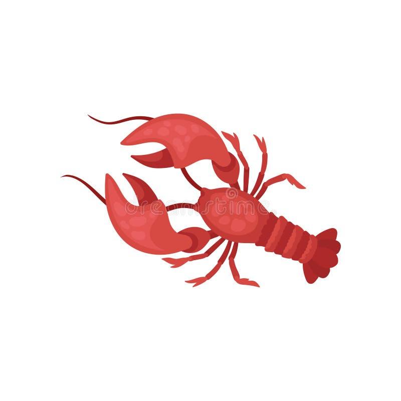 Zeekreeft met heldere rode shell en lange antennes Rivierkreeften met grote klauwen Marien schepsel Overzees dier Vlakke vector stock illustratie