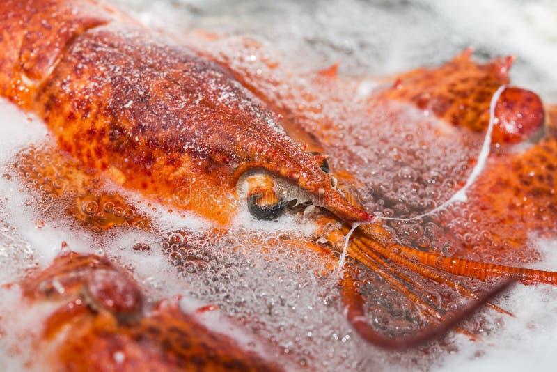 Zeekreeft in warm water royalty-vrije stock fotografie