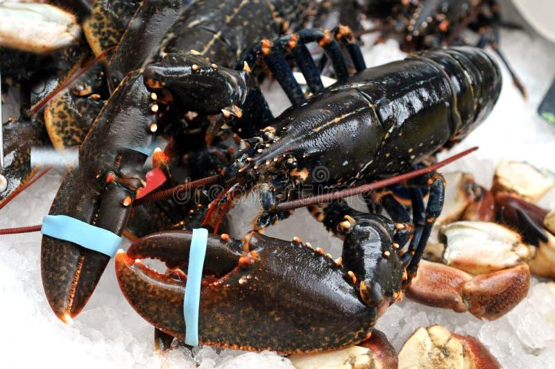 Zeekreeften op de box van een vishandelaar stock afbeeldingen