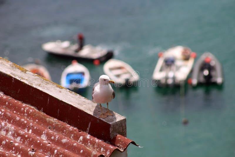 Zeemeeuw boven overzees, Berlengas, Portugal, Europa stock fotografie