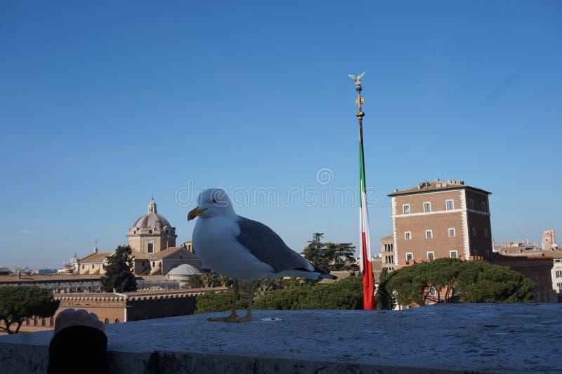 Zeemeeuw in de stad van Rome stock foto
