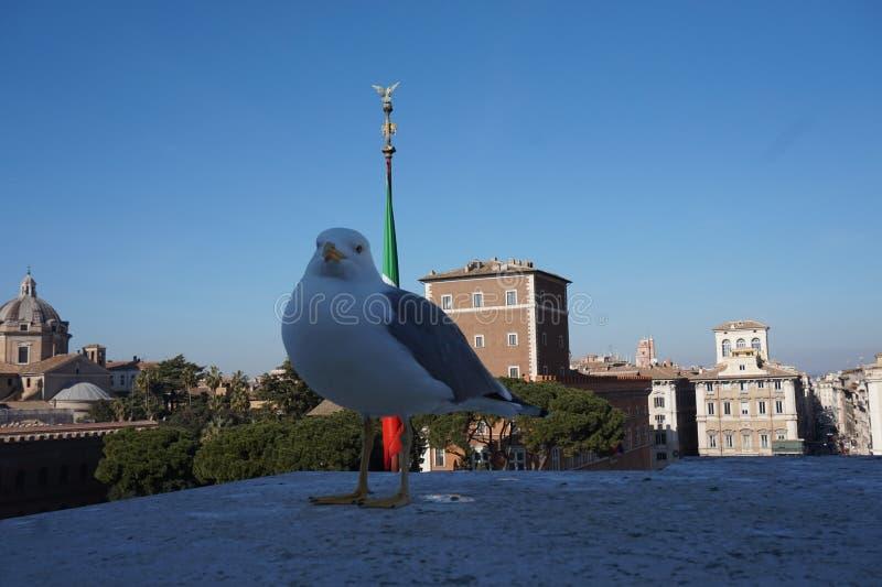 Zeemeeuw in de stad van Rome royalty-vrije stock foto