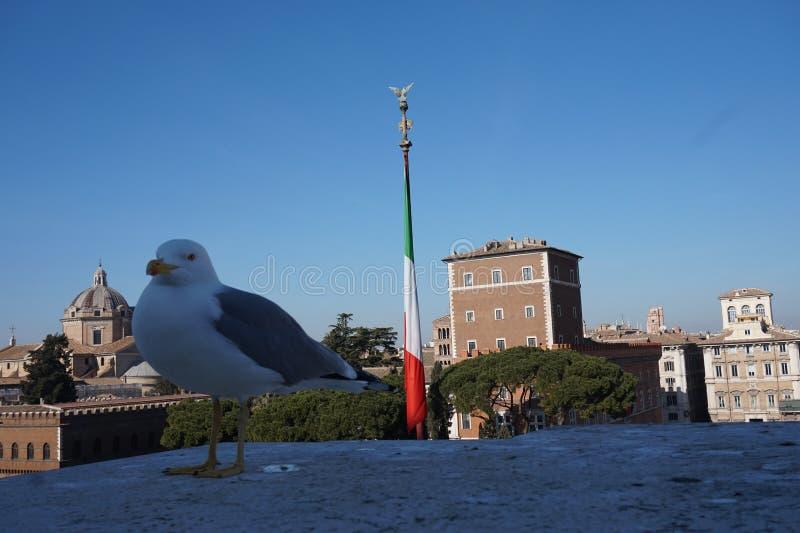 Zeemeeuw in de stad van Rome stock afbeelding