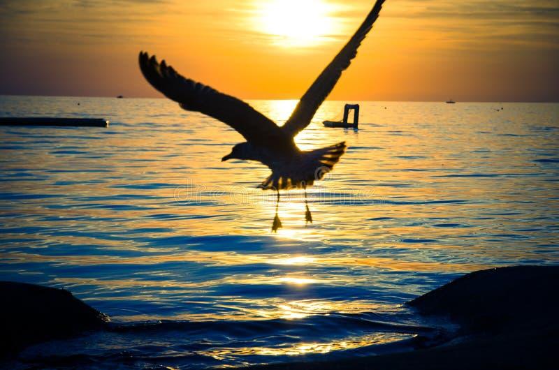 Zeemeeuw in de zonsondergang royalty-vrije stock fotografie