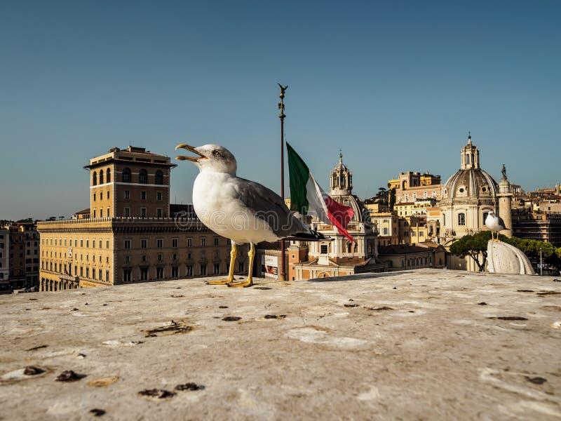 Zeemeeuw dichte omhooggaand met stad van Rome op achtergrond royalty-vrije stock foto's