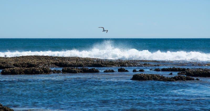 Zeemeeuw die bij Blauwe Gaten stijgen royalty-vrije stock foto