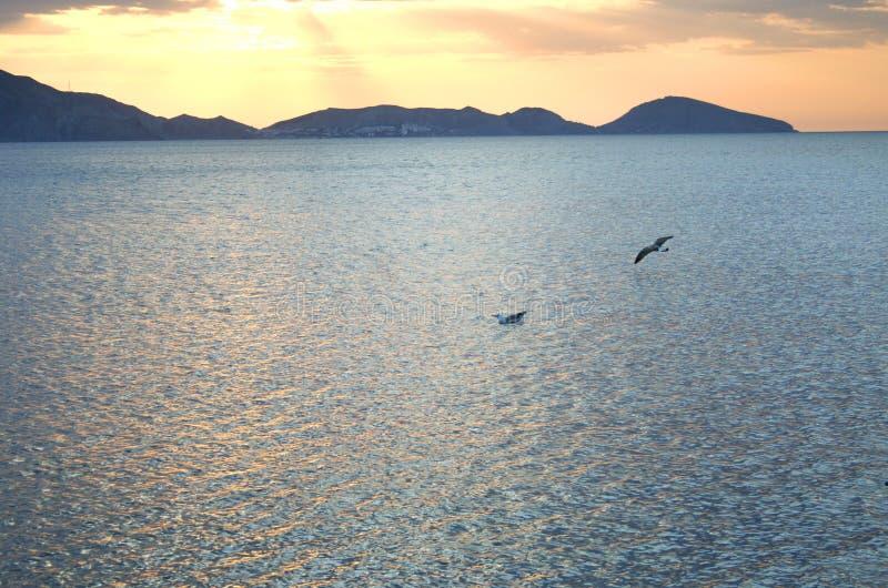 Zeemeeuw die bij dageraad vliegen royalty-vrije stock foto