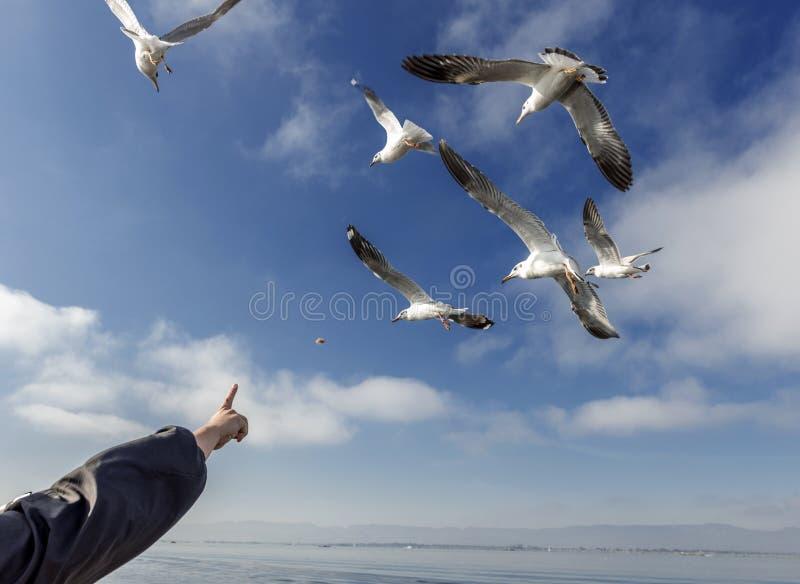 Zeemeeuw die in Inle-Meer vliegen, royalty-vrije stock afbeeldingen