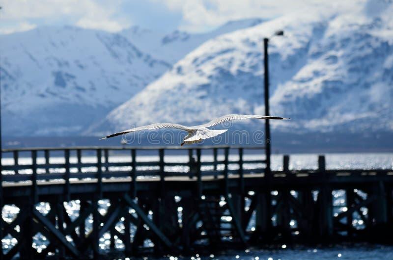 Zeemeeuw die naar pijler in fjord op zonnige dag stijgen royalty-vrije stock foto's
