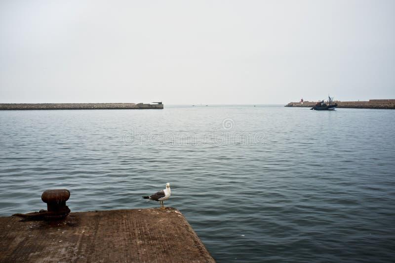 Zeemeeuw die op de vissersboten wachten om dichtbij de poort van de haven aan te komen royalty-vrije stock afbeeldingen