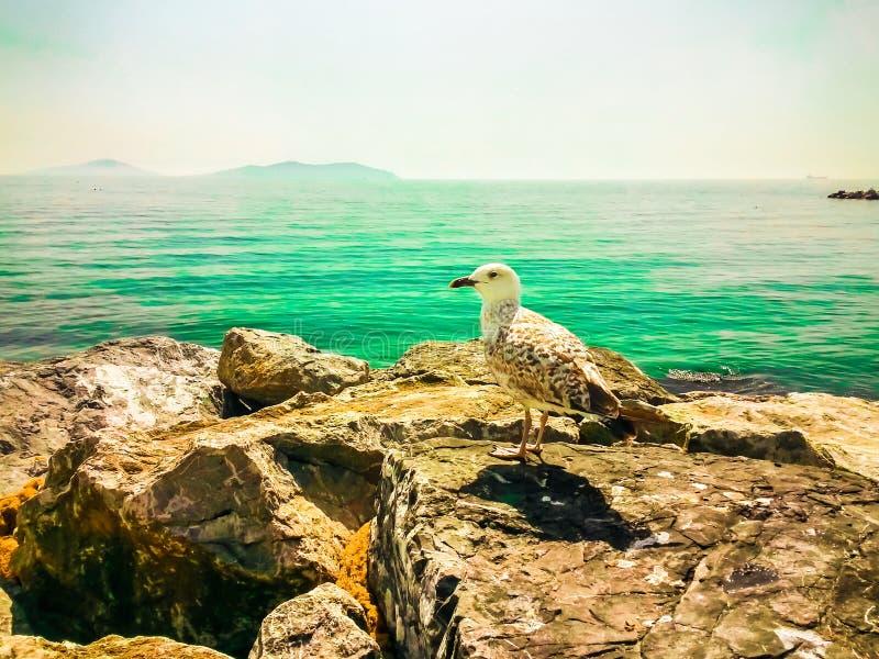 Zeemeeuw die op een rots rusten die het overzees overzien royalty-vrije stock foto