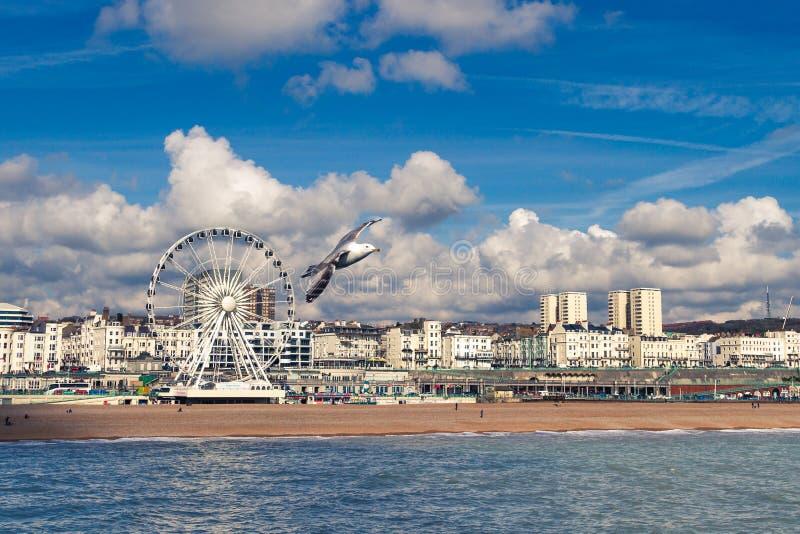 Zeemeeuw die op het strand van Brighton vliegen royalty-vrije stock afbeelding