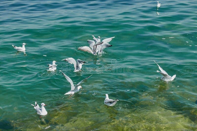 Zeemeeuw die op meer vliegen stock foto's