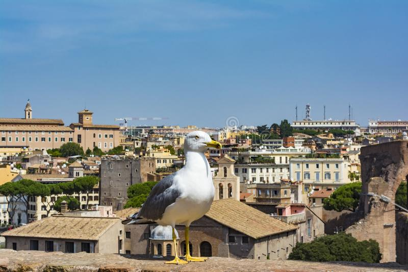 Zeemeeuw die op Rome letten Vogel in Roman Forum, het historische stadscentrum, Rome, Italië royalty-vrije stock foto