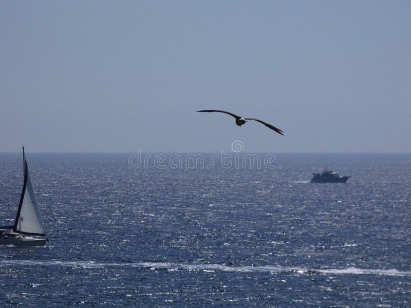 Zeemeeuw die over de Middellandse Zee vliegen stock foto