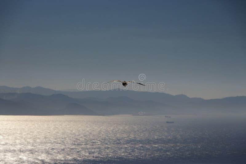 Zeemeeuw die over de Straat van Gibraltar stoten royalty-vrije stock afbeelding