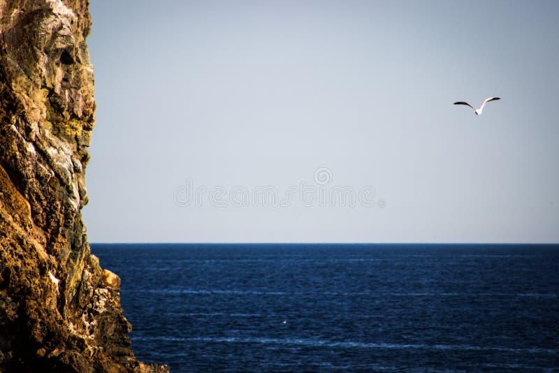 Zeemeeuw die over diepe blauwe oceaan met reusachtige klip in voorgrond vliegen royalty-vrije stock afbeeldingen