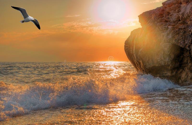 Zeemeeuw die over het overzees stijgt stock afbeelding