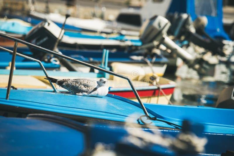Zeemeeuw die rust op blauwe boot sundeck in Piran-jachthaven hebben stock fotografie