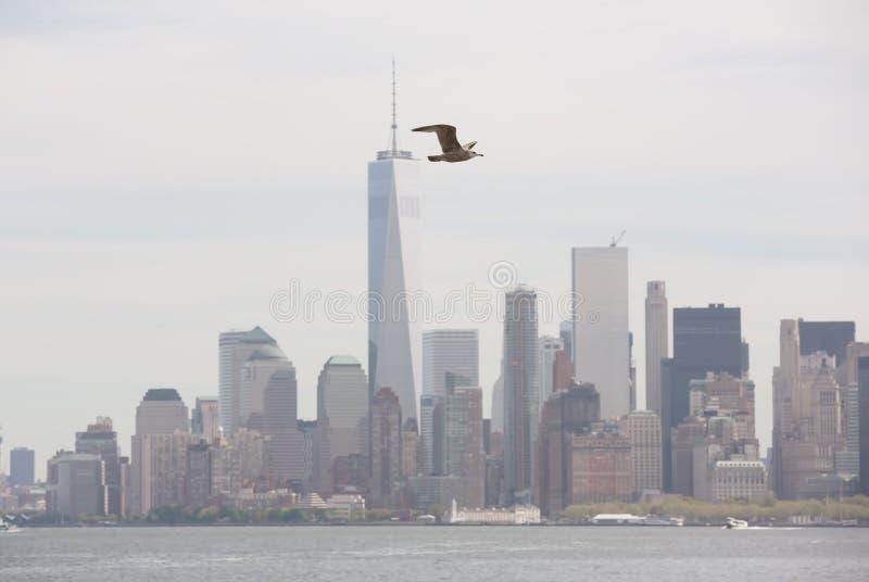 Zeemeeuw die tegen de achtergrond van Manhattan vliegen royalty-vrije stock foto's