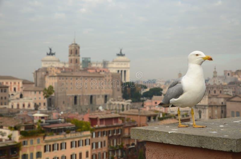 Zeemeeuw die zich met achtergrond van de stad van Rome, Italië bevinden royalty-vrije stock afbeelding