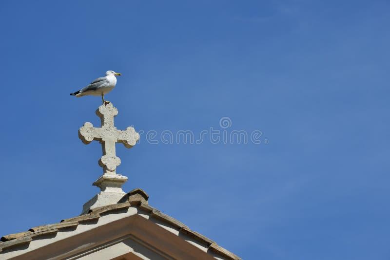 Zeemeeuw en kruis stock afbeelding