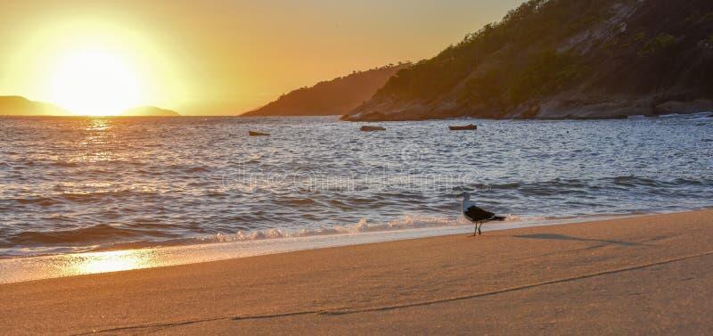 Zeemeeuw en mooie zonsopgang bij Rood Strand dichtbij Sugarloaf-Berg, Rio de Janeiro royalty-vrije stock afbeelding