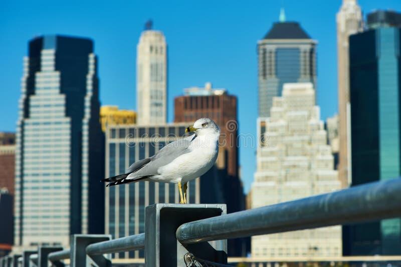 Zeemeeuw met Manhattan op achtergrond stock afbeeldingen