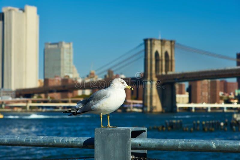 Zeemeeuw met Manhattan op achtergrond stock fotografie