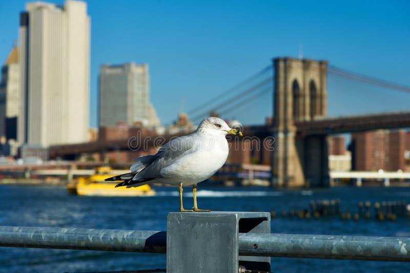 Zeemeeuw met Manhattan op achtergrond royalty-vrije stock foto's