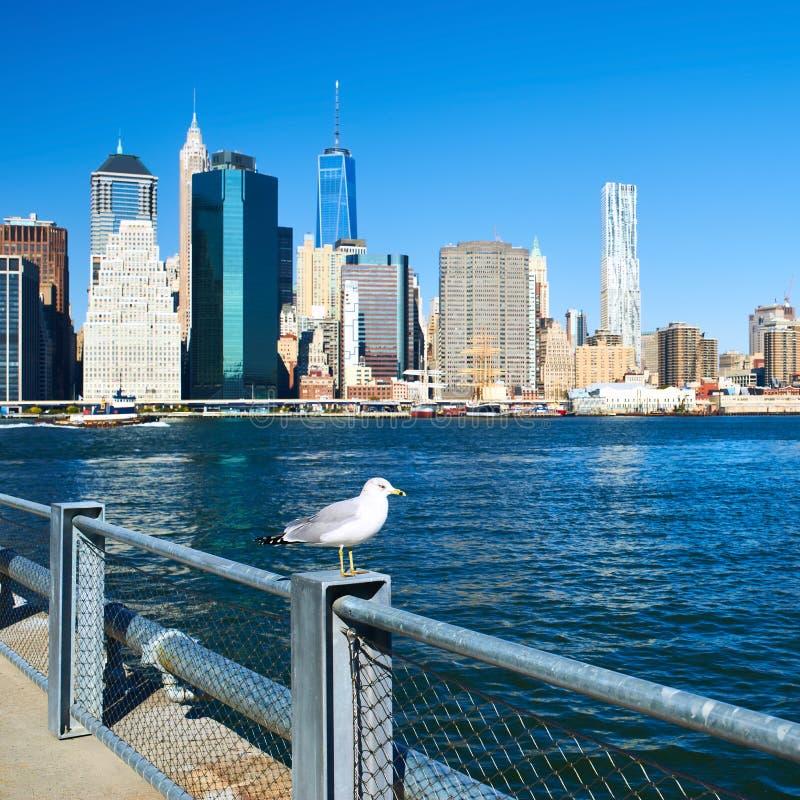 Zeemeeuw met Manhattan op achtergrond Nadruk op de vogel royalty-vrije stock afbeeldingen