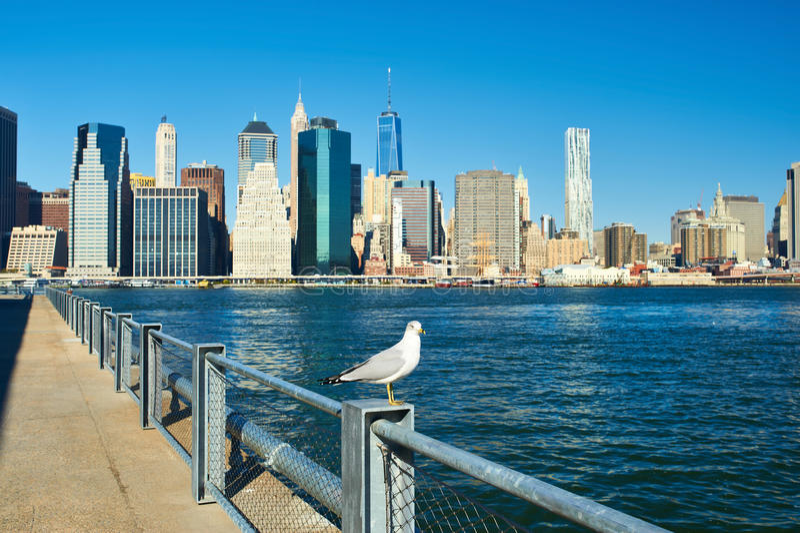Zeemeeuw met Manhattan op achtergrond Nadruk op de vogel stock fotografie