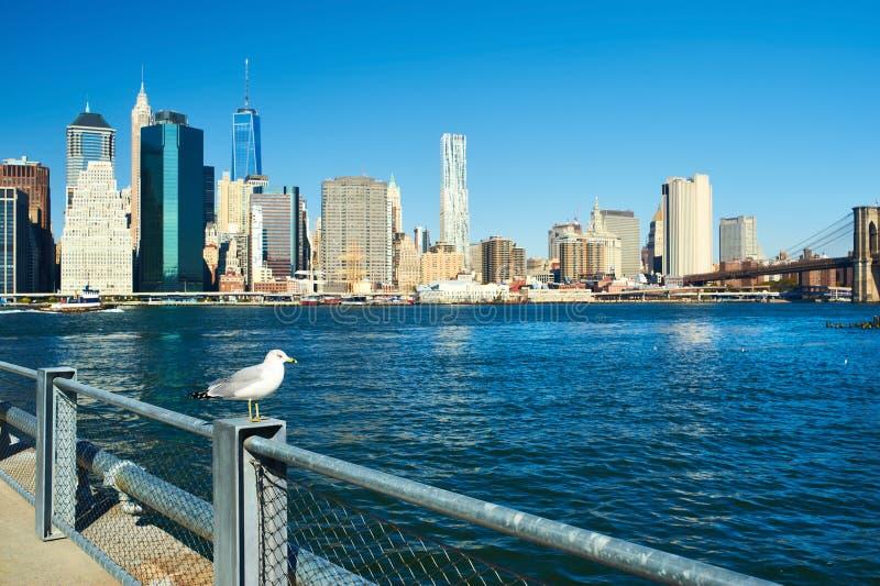 Zeemeeuw met Manhattan op achtergrond Nadruk op de vogel stock afbeeldingen