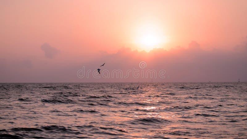 Zeemeeuw met mooie zonsondergang royalty-vrije stock afbeelding