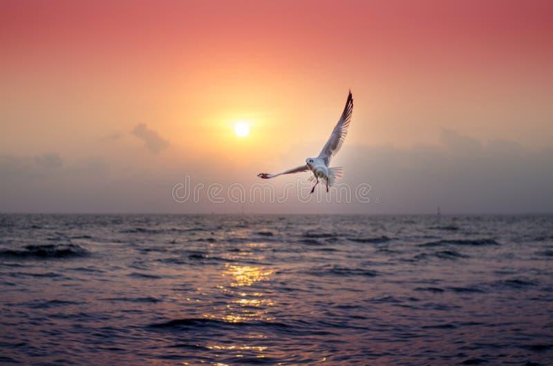 Zeemeeuw met mooie zonsondergang op de achtergrond stock foto