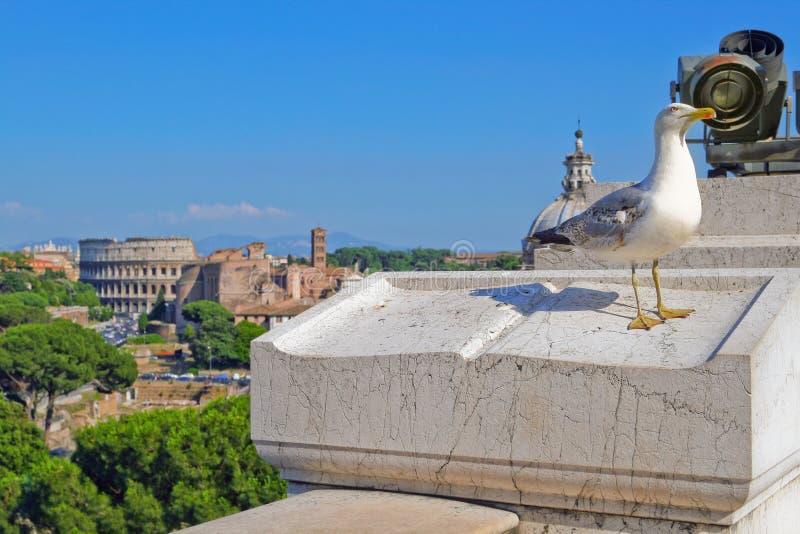 Zeemeeuw op de achtergrond van het Forum en Coliseum in Rome royalty-vrije stock afbeeldingen