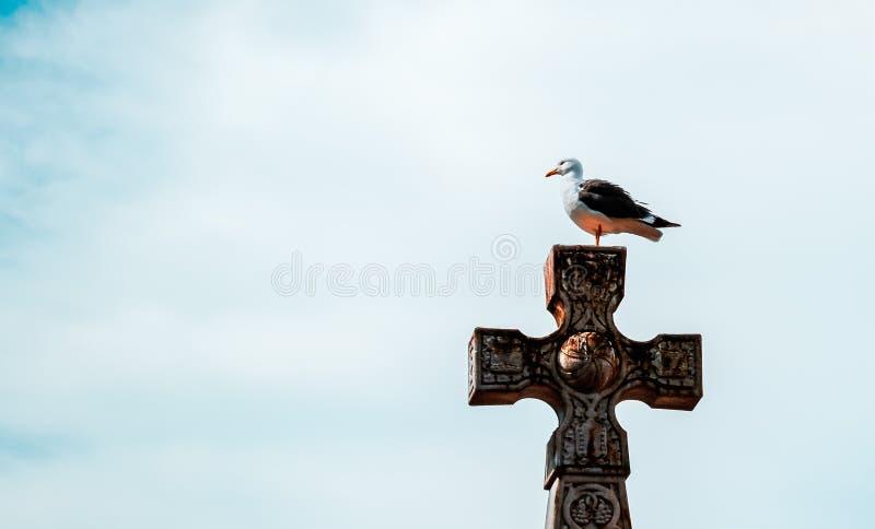 Zeemeeuw op een kruis wordt neergestreken dat stock fotografie
