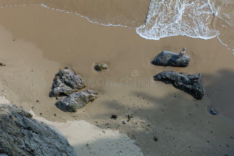 Zeemeeuw op een rots stock foto