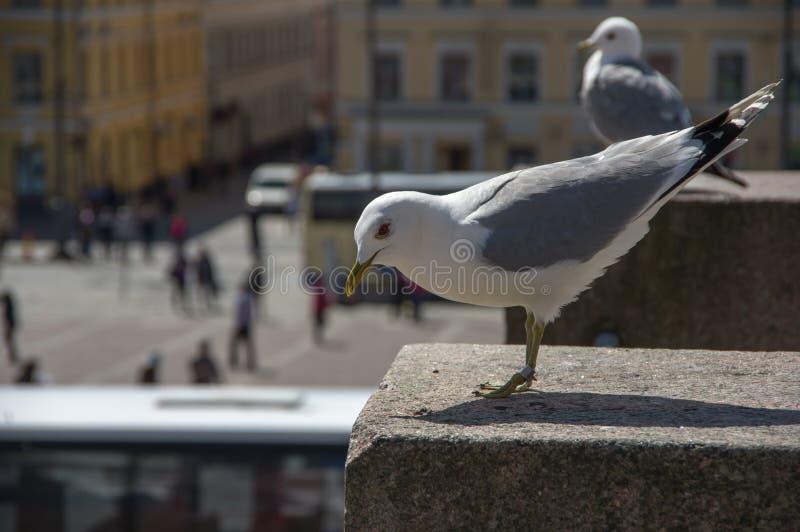 Zeemeeuw op granietrots stock fotografie
