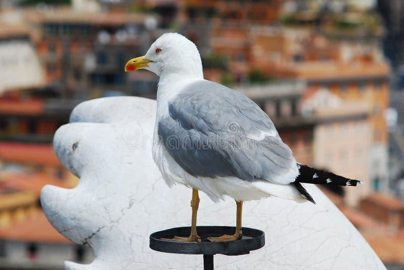 Zeemeeuw op het de stadsdak van Rome stock foto's
