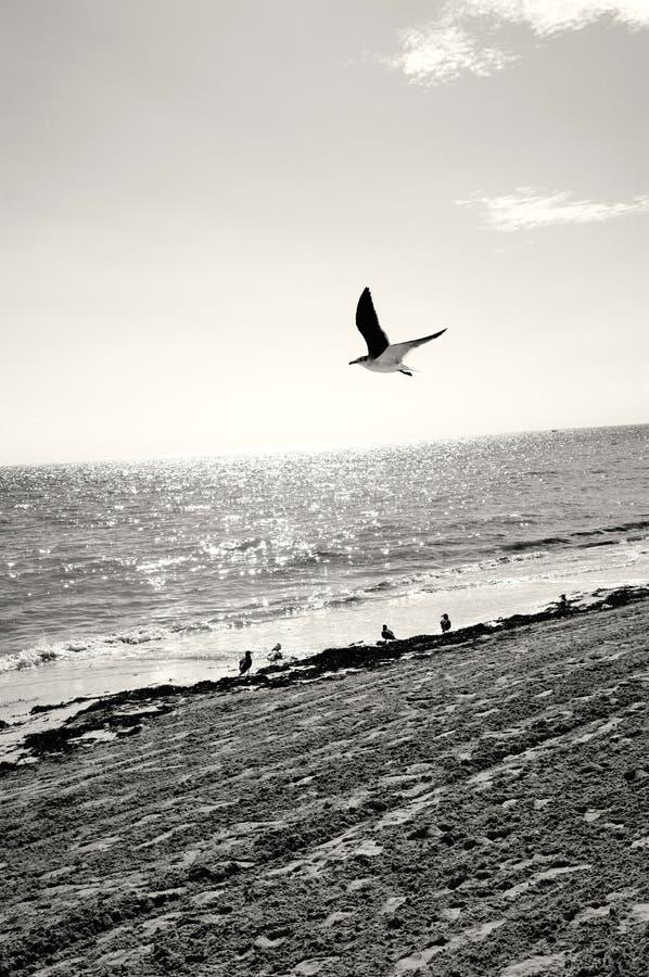 Zeemeeuw op het strand stock foto